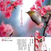 2016sakuraichibanpopA3